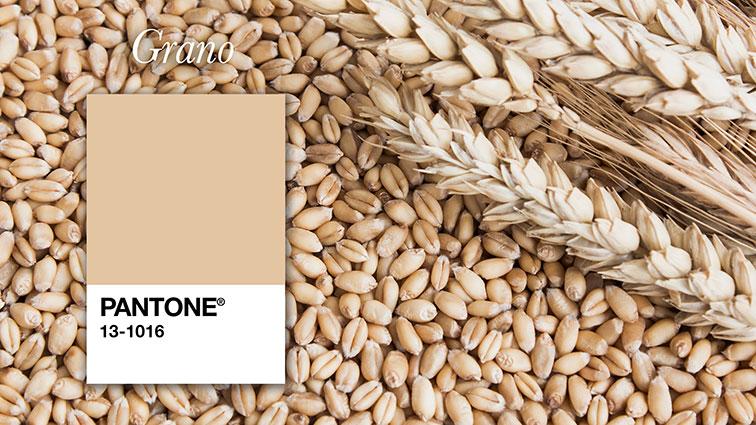 pantone color grano